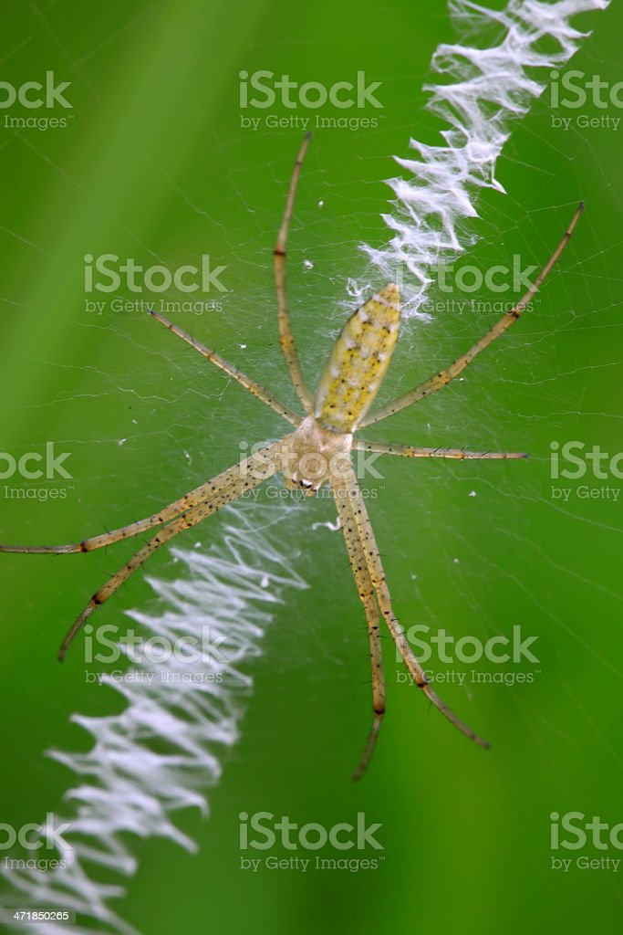 spider on the net royalty-free stock photo