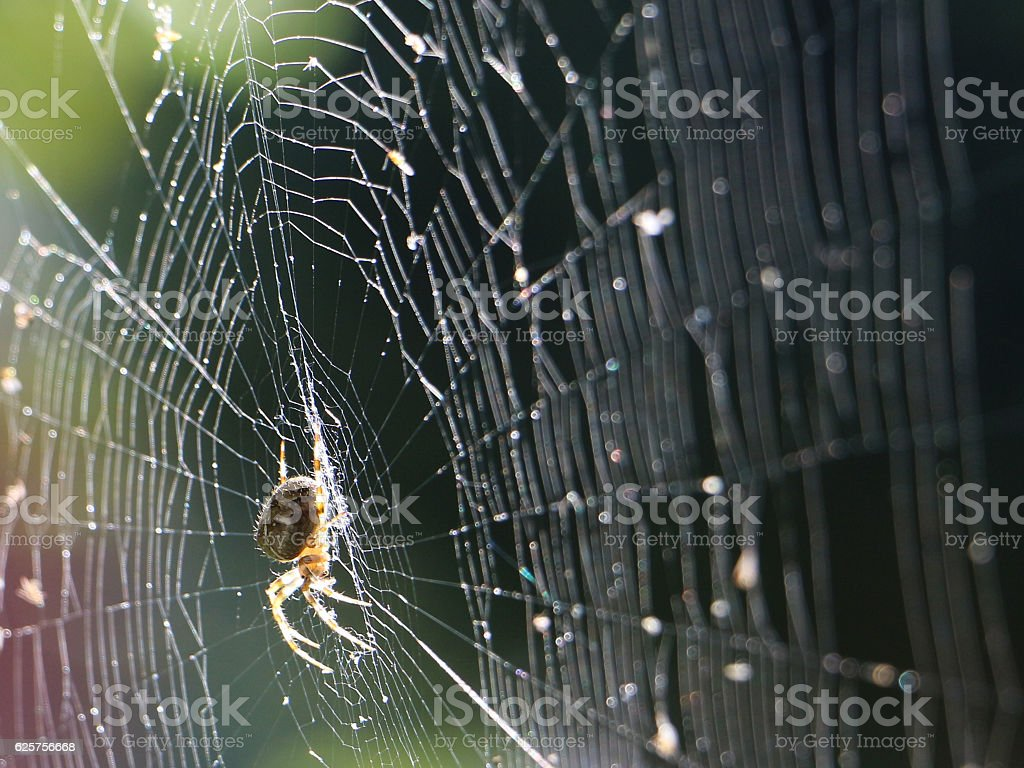 Spider on the web in the sunshine stock photo