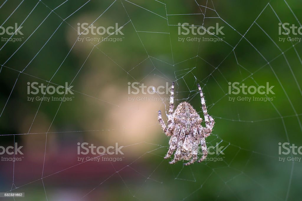 Spider on the web over green background stock photo