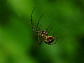 Spider on web close up