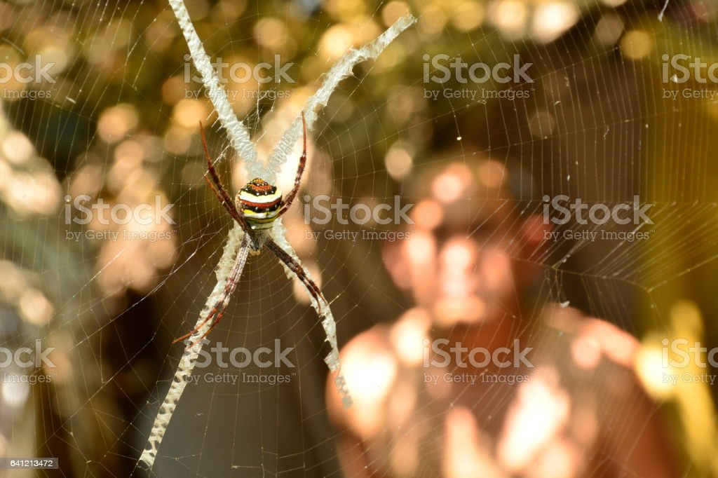 spider on web look creepy and scary on nature background stock photo