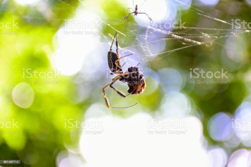 Spider on Web stock photo