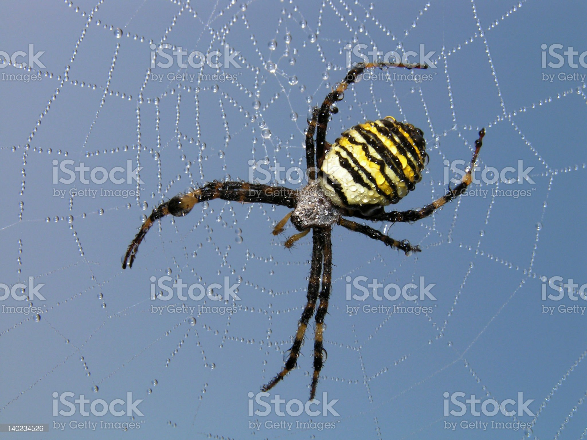 Spider. royalty-free stock photo