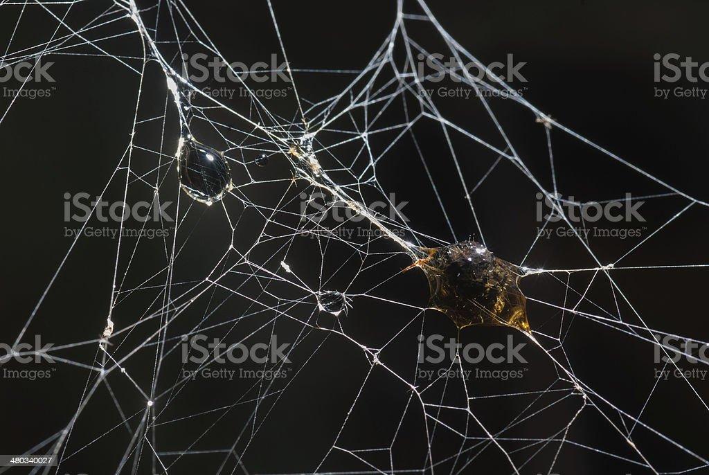 spider zbiór zdjęć royalty-free