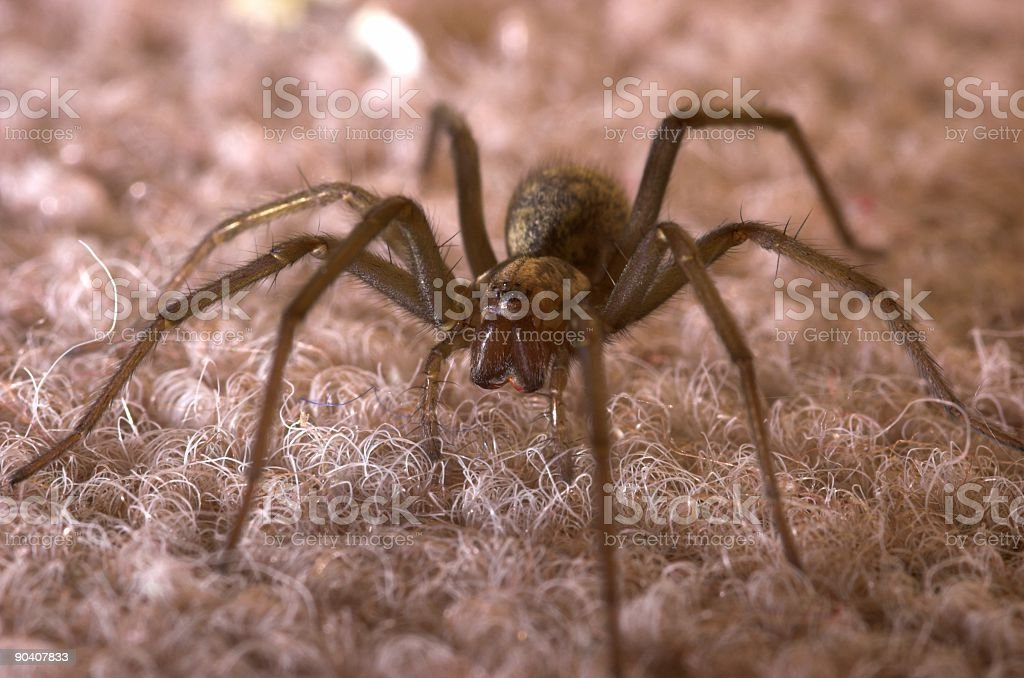 Spider Ready to Pounce stock photo