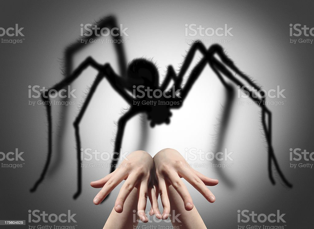 Spider shadow on the wall royalty-free stock photo