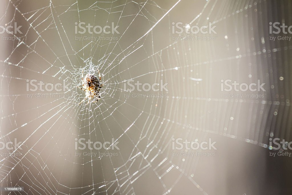Spider sitting on its web royalty-free stock photo