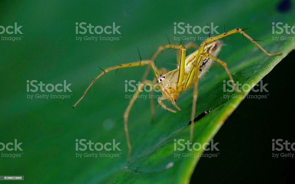 Spider standing on leaves stock photo