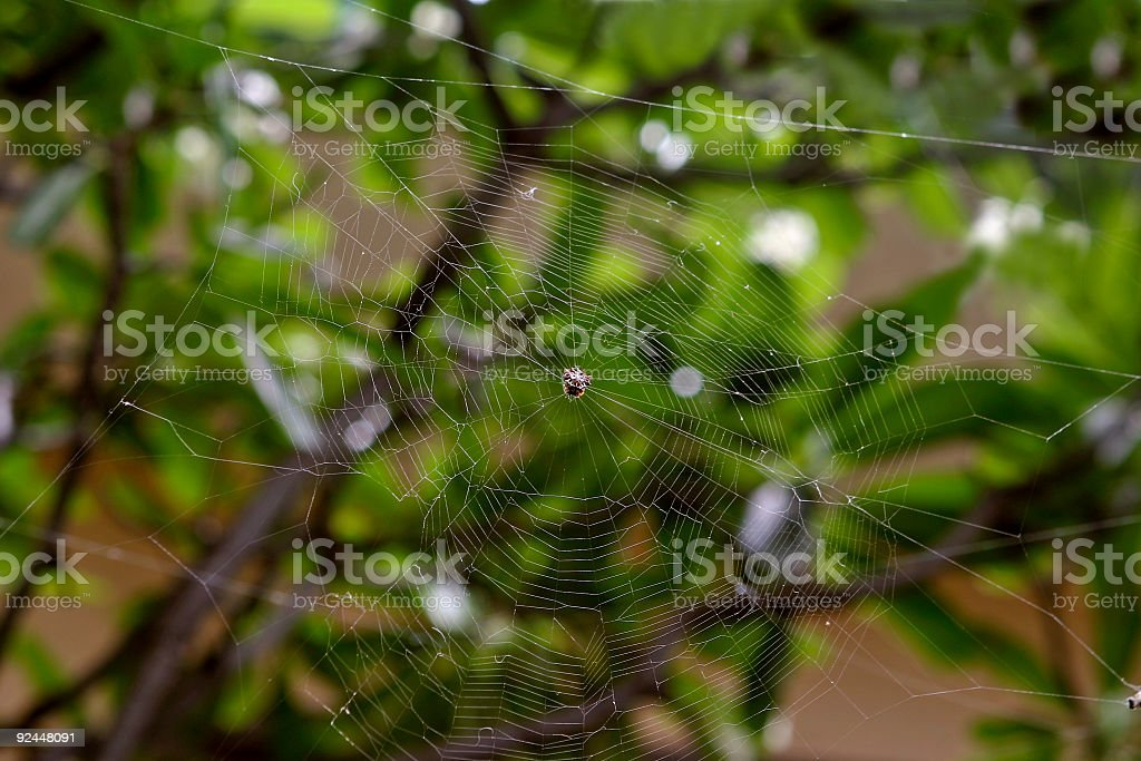 Spider tends their web in wait stock photo
