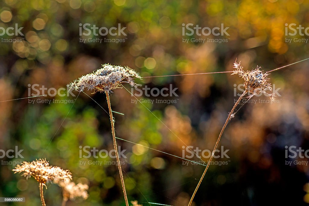 spider threads on a flower stock photo