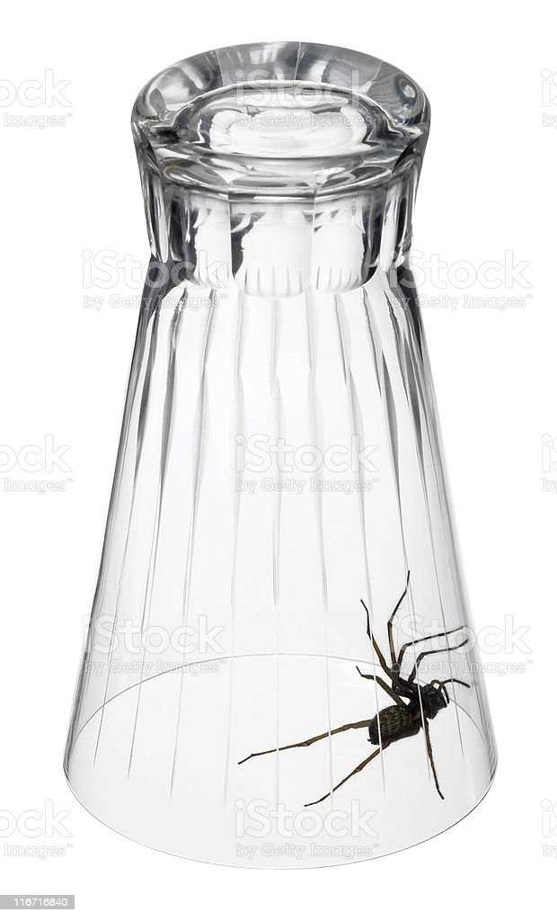 spider under a drinking glass royalty-free stock photo