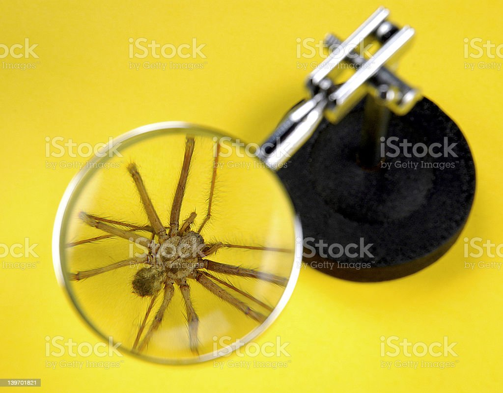 spider under magnifying glass royalty-free stock photo
