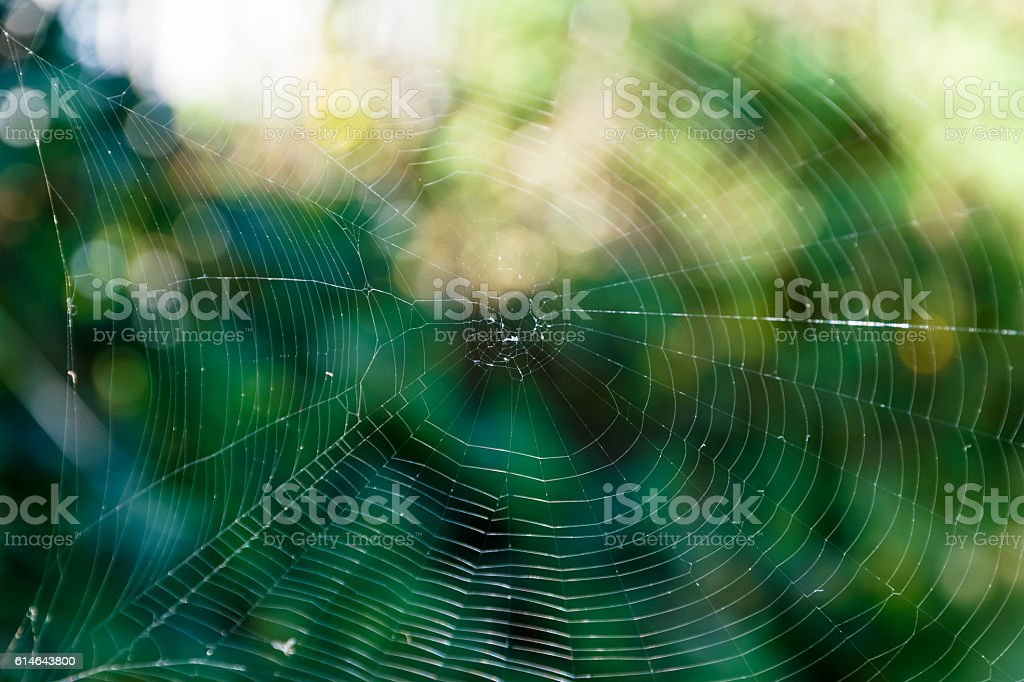 Spider Web Against Green Background stock photo