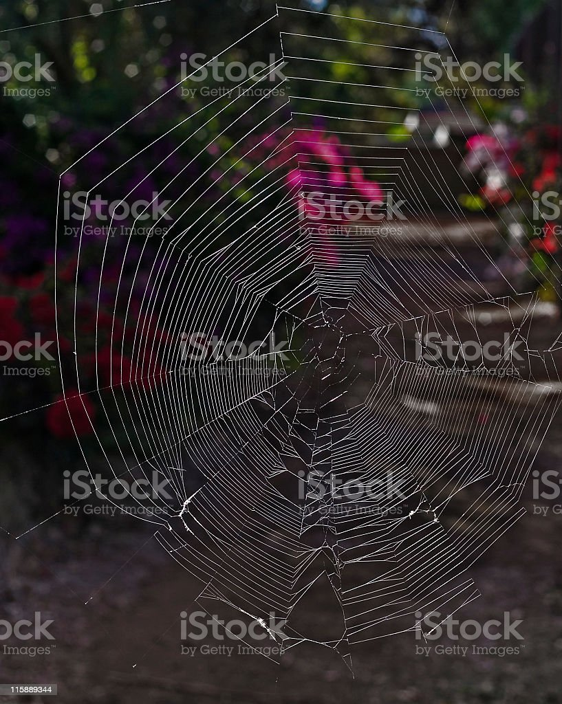 Spider Web and bougainvillea royalty-free stock photo