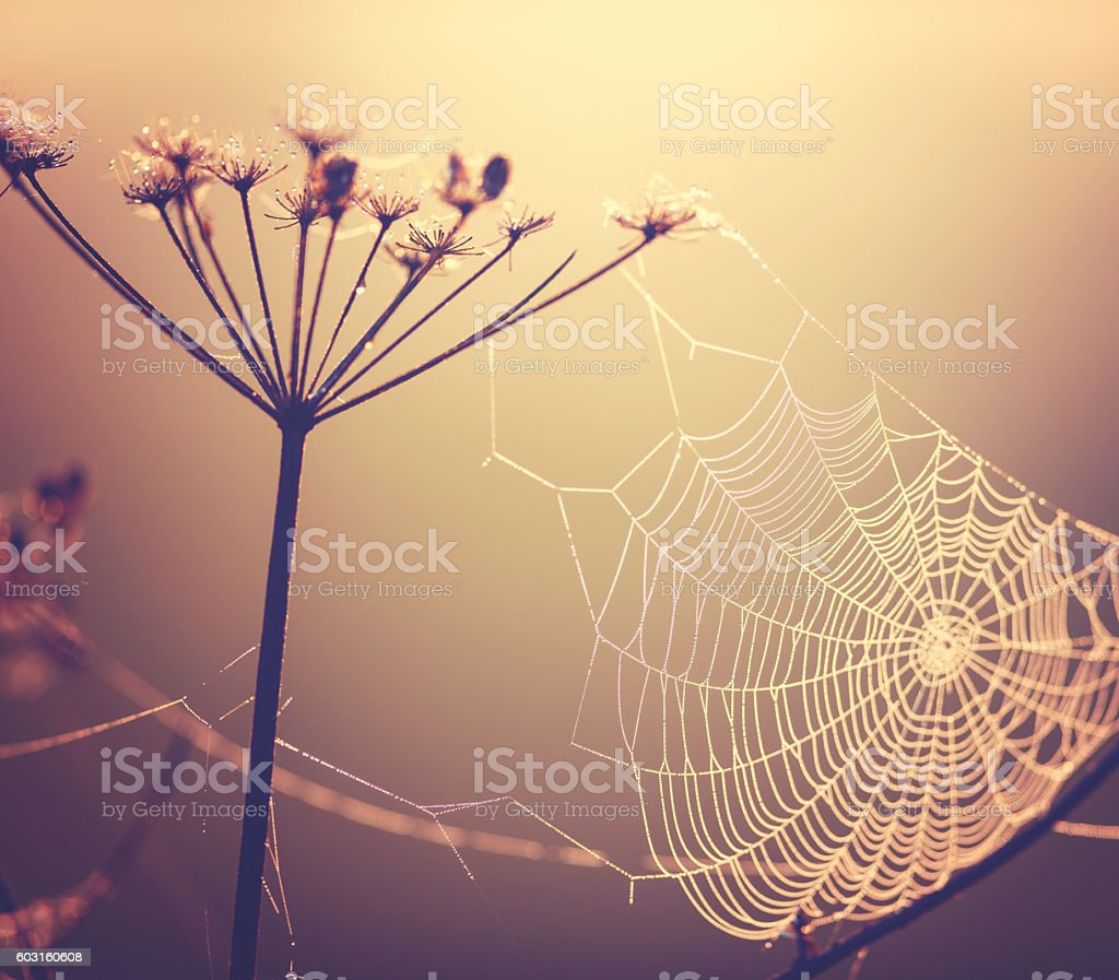 Spider web at the meadow stock photo