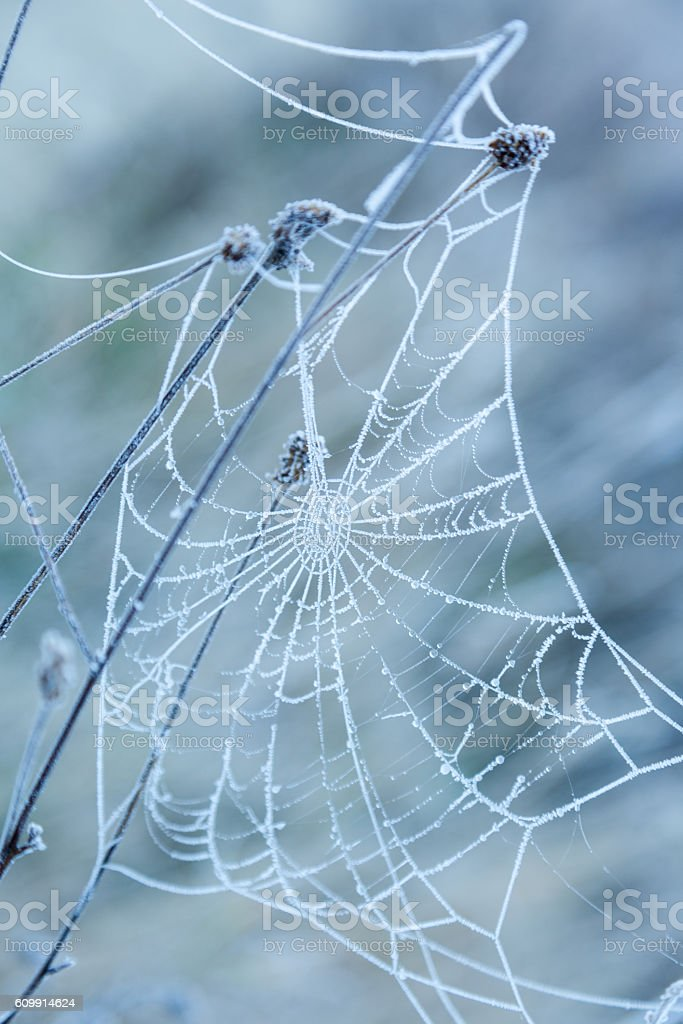 Spider web covered with frost stock photo