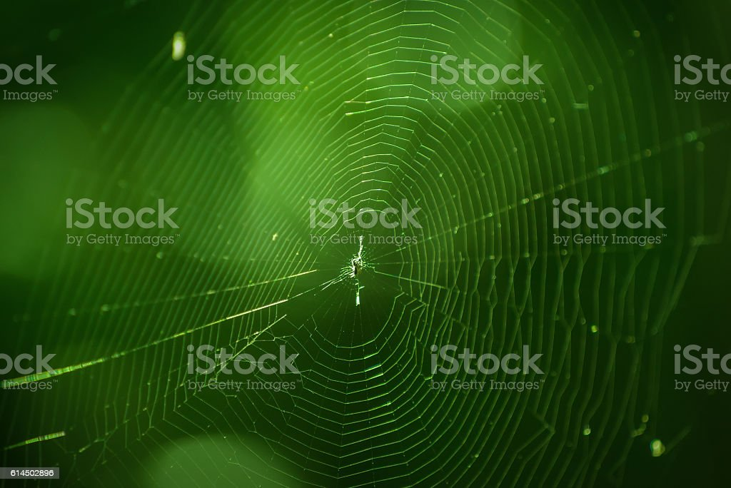 Spider web in forest. stock photo