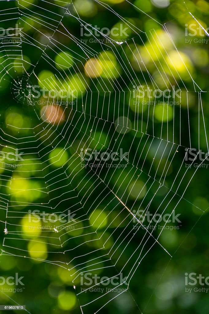 Spider web in the rays of the sun stock photo