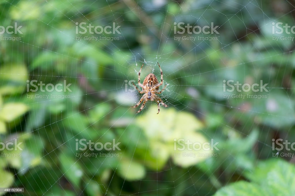 Spider web - macro photography stock photo