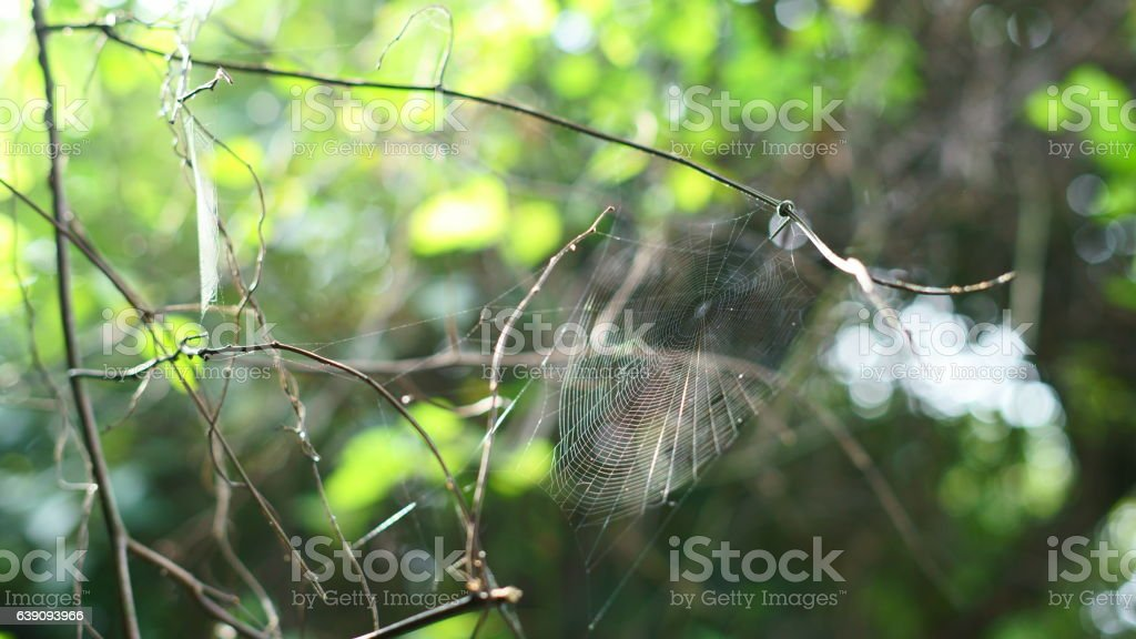 Spider web on a branch stock photo