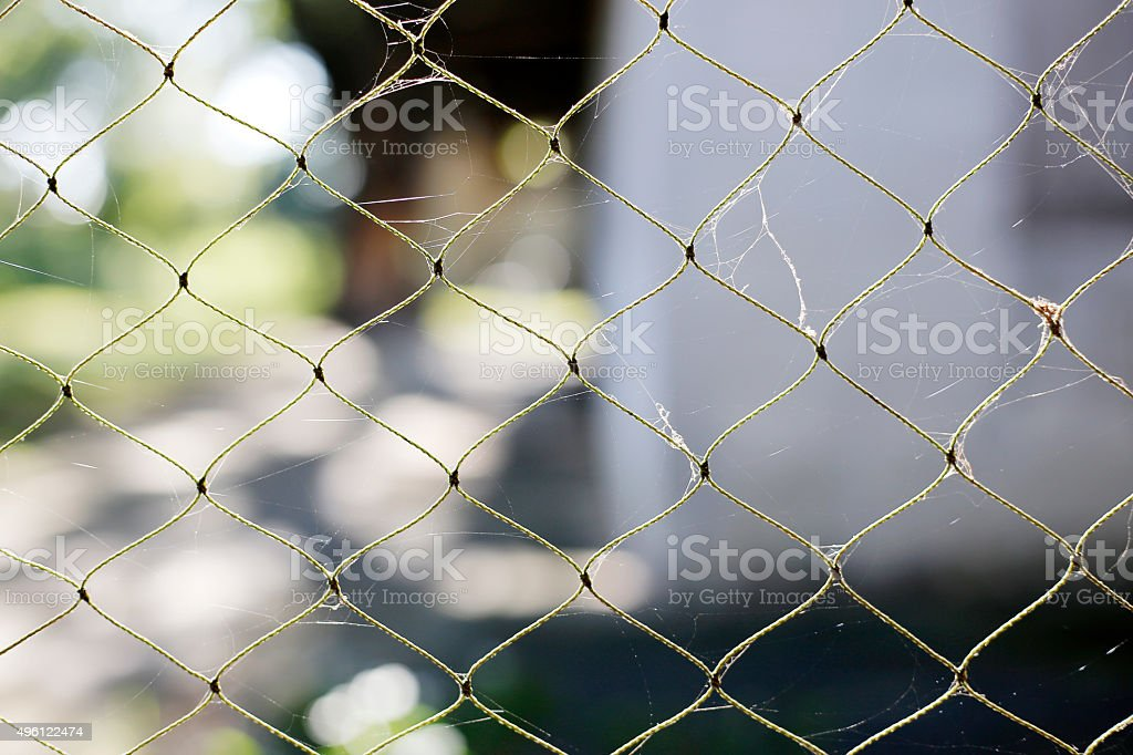 Spider web on old net stock photo