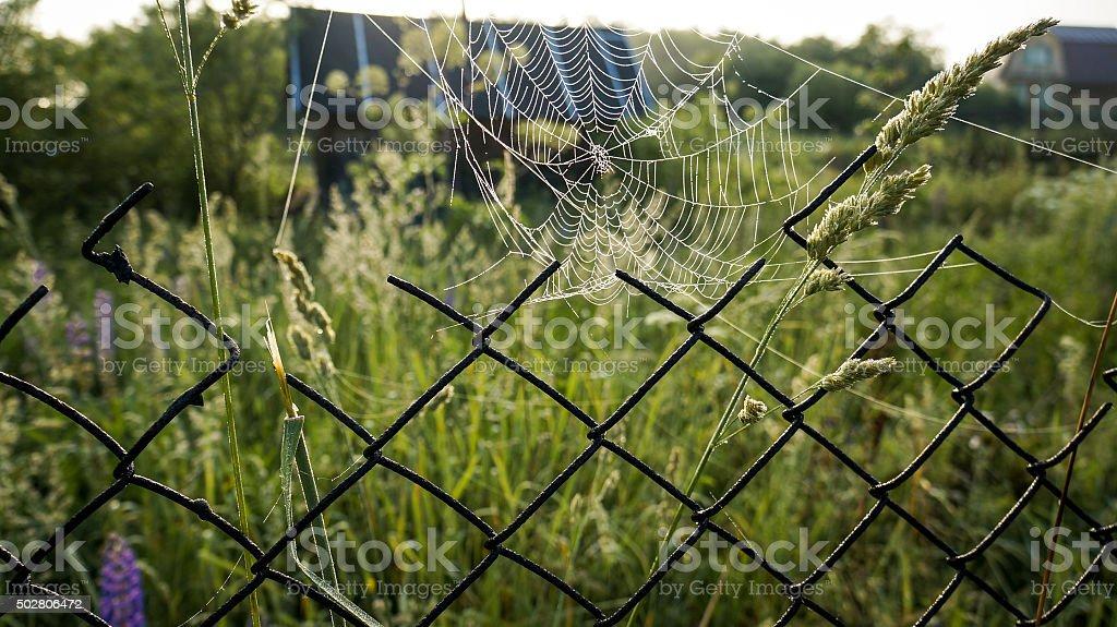Teia de aranha no fio rede foto de stock royalty-free
