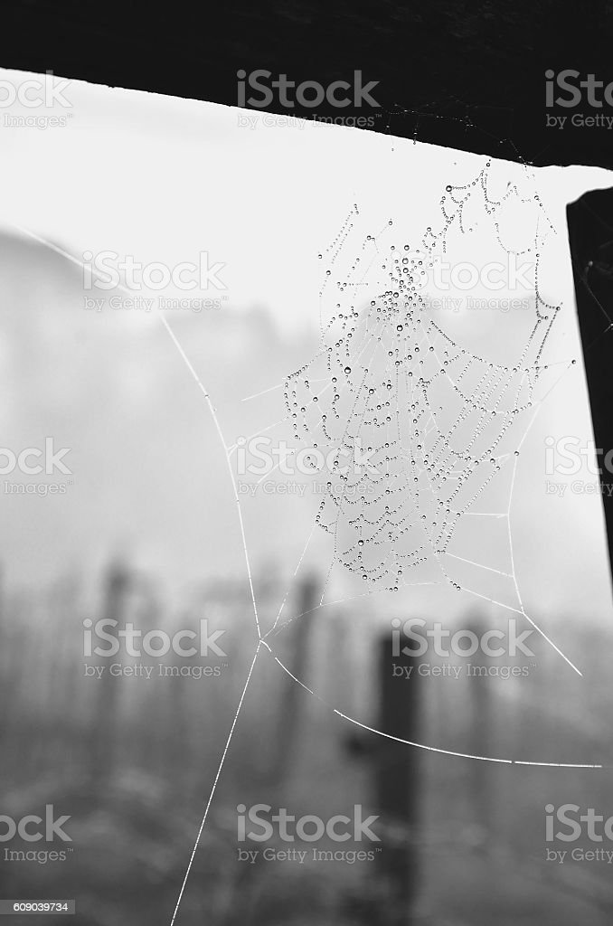 Spider web royalty-free stock photo
