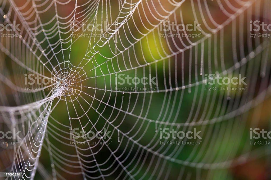 Spider web unfocused background royalty-free stock photo
