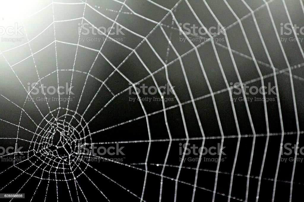 Spider Web With Beaded Dew stock photo