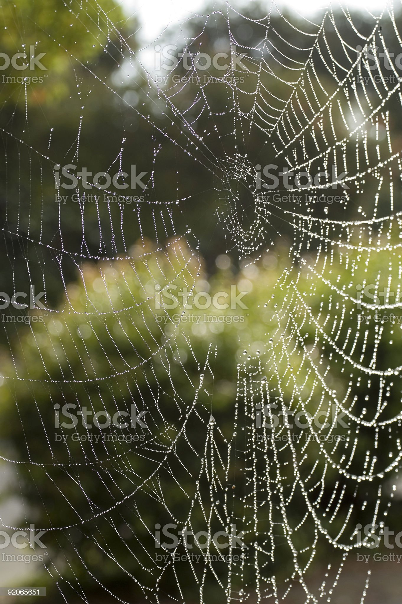 Spider web with dew royalty-free stock photo
