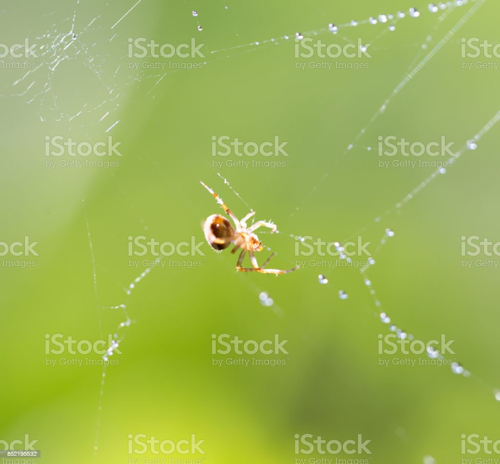 spider web with water drops stock photo
