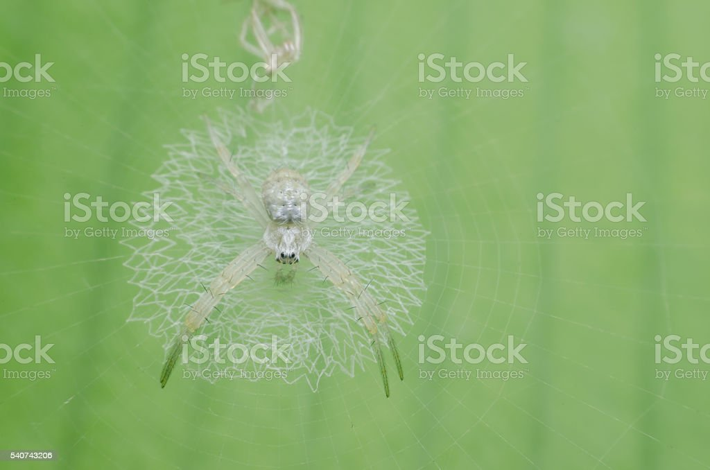 Spider webs and molt stock photo