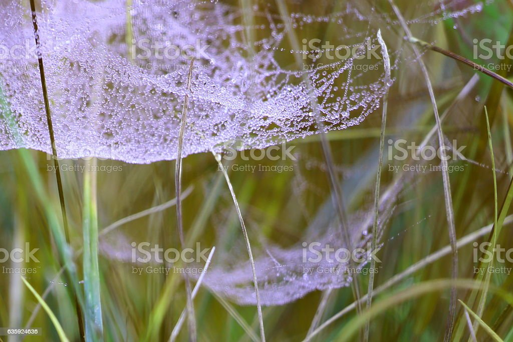 Spider web's condensed water stock photo