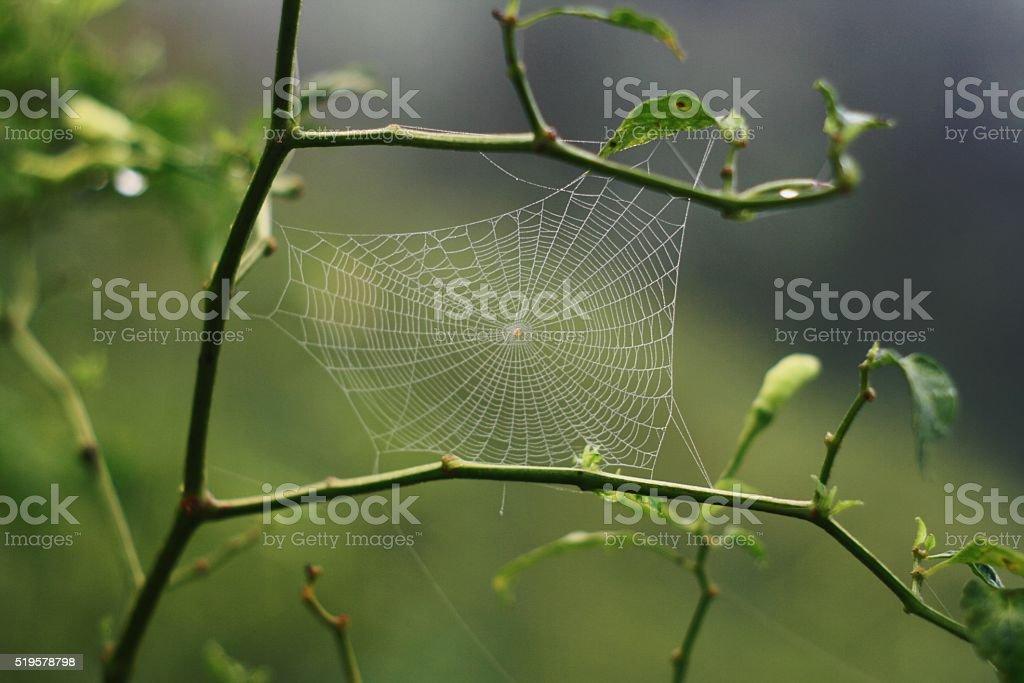 Spider webs stock photo