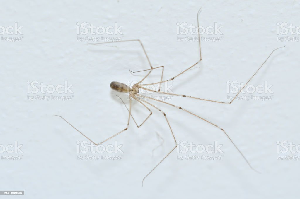 spider with big legs stock photo