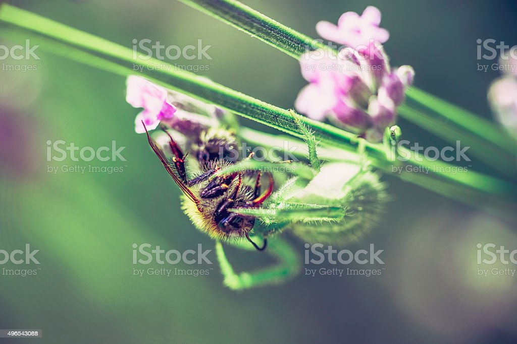 spider with catch stock photo