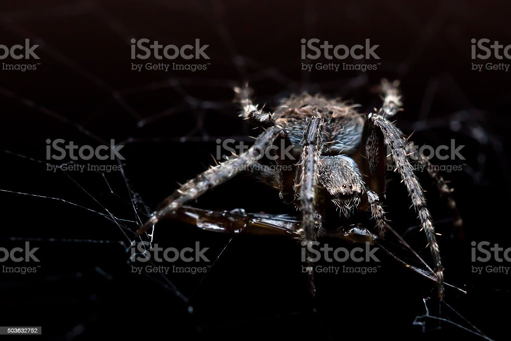 Spider with its prey stock photo