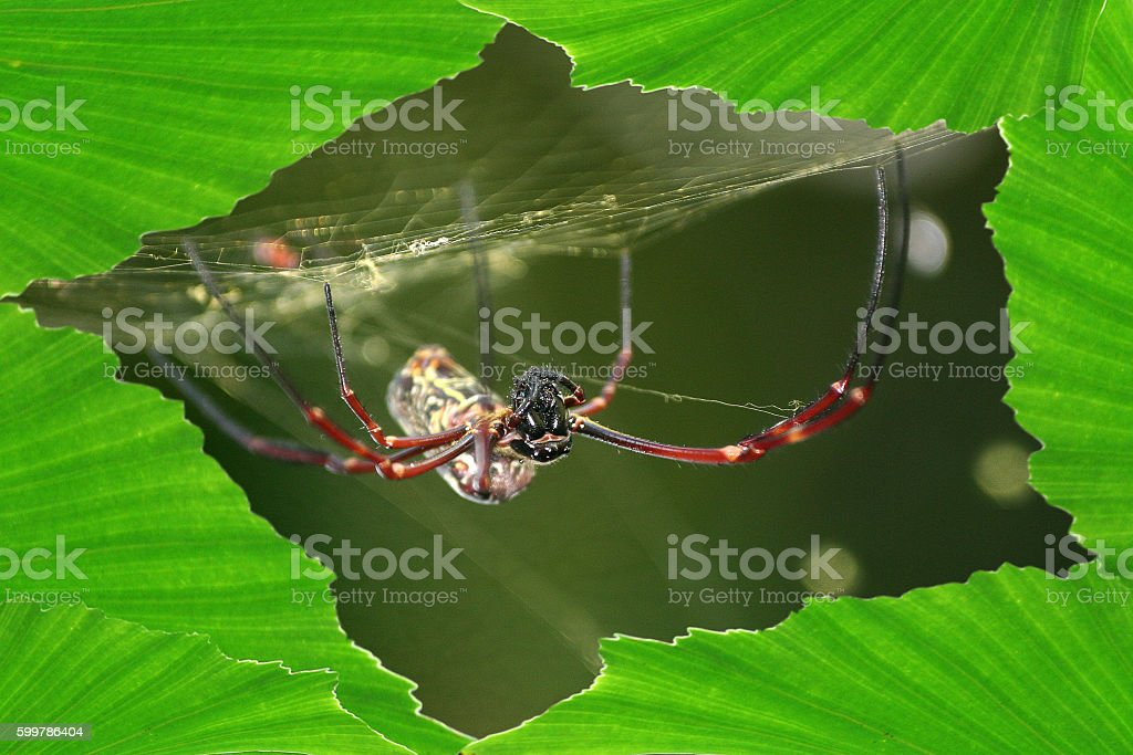Spider with leaf. stock photo