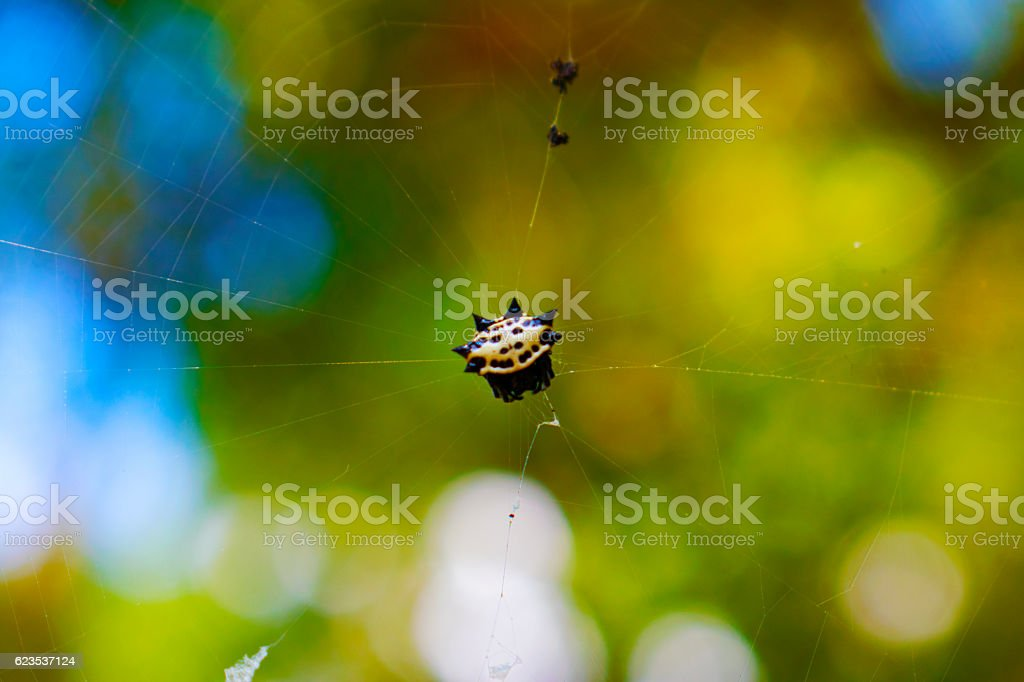 Spider with Spikes on Web stock photo