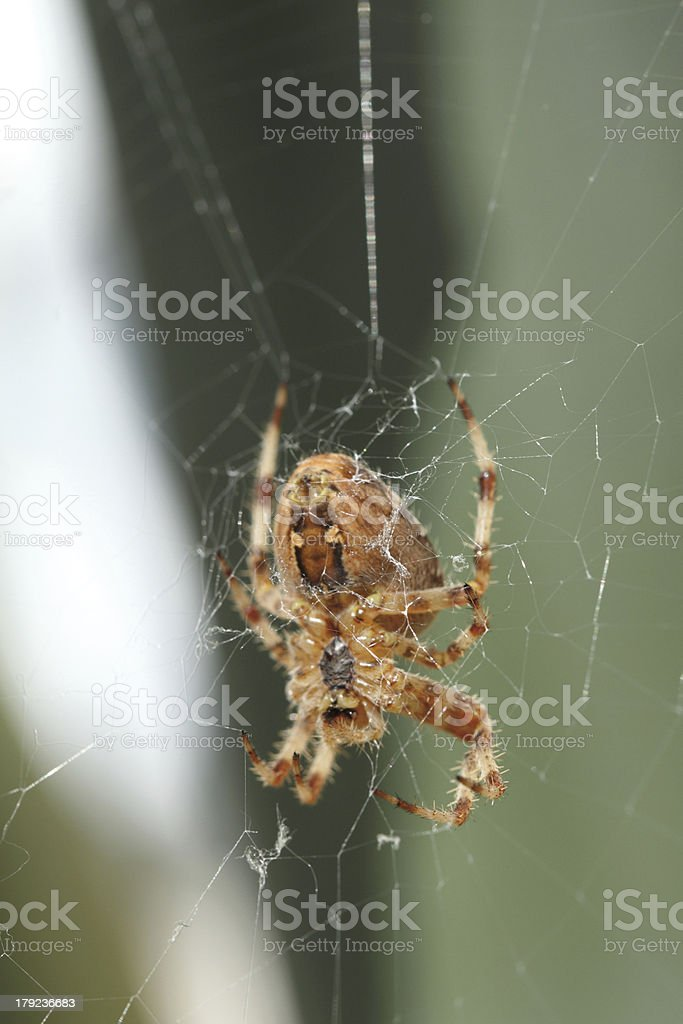 spider work royalty-free stock photo