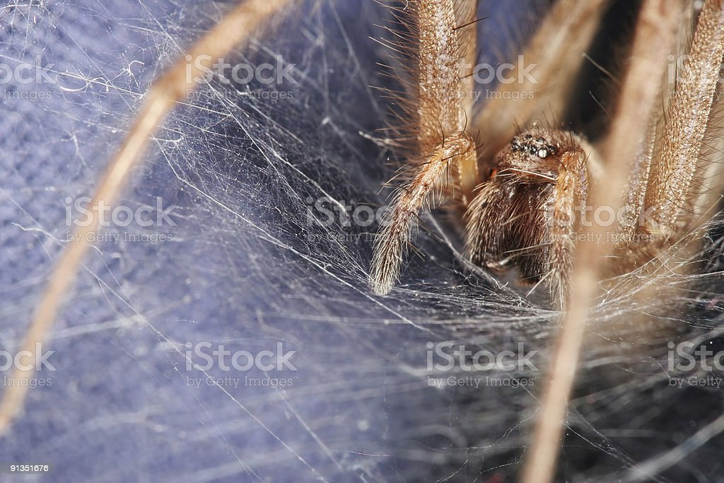 Spider's lair 02 stock photo