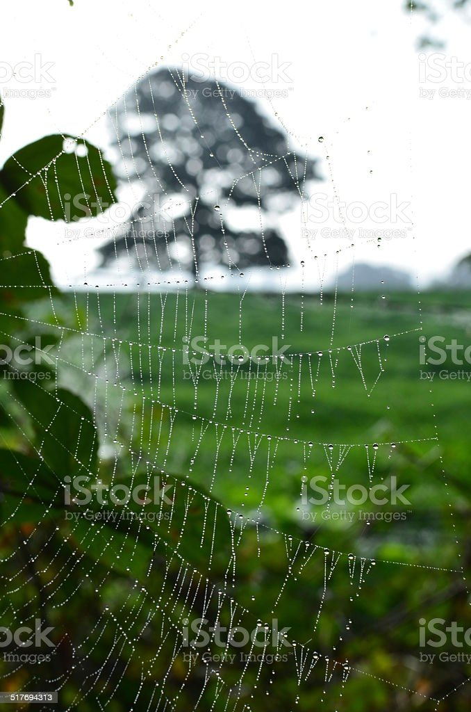 Spiders at dawn. stock photo