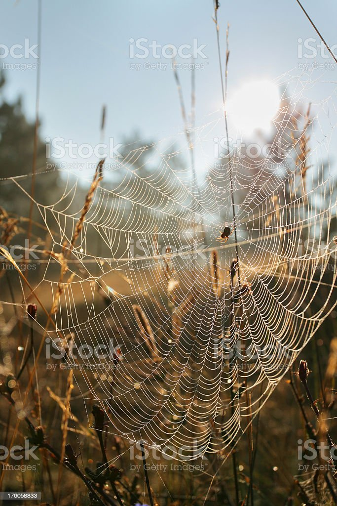 Spider's morning royalty-free stock photo