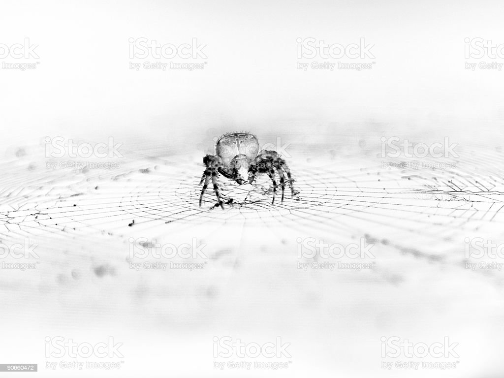 spider's web 2 royalty-free stock photo