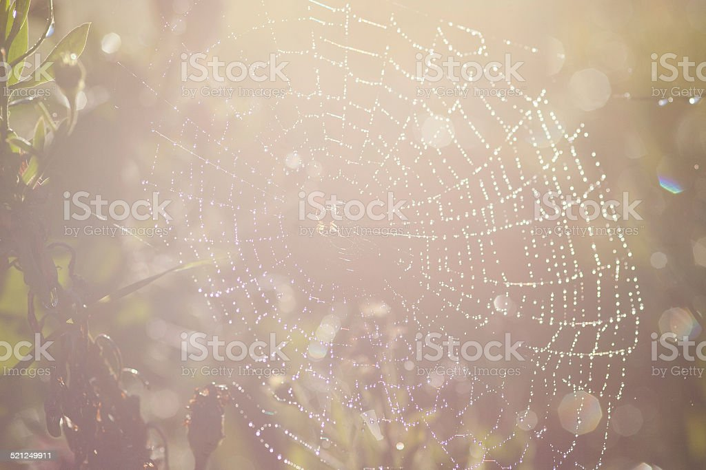 Spiders web early in the morning stock photo
