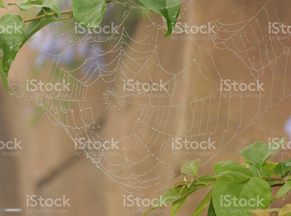 Spider web foto de stock libre de derechos