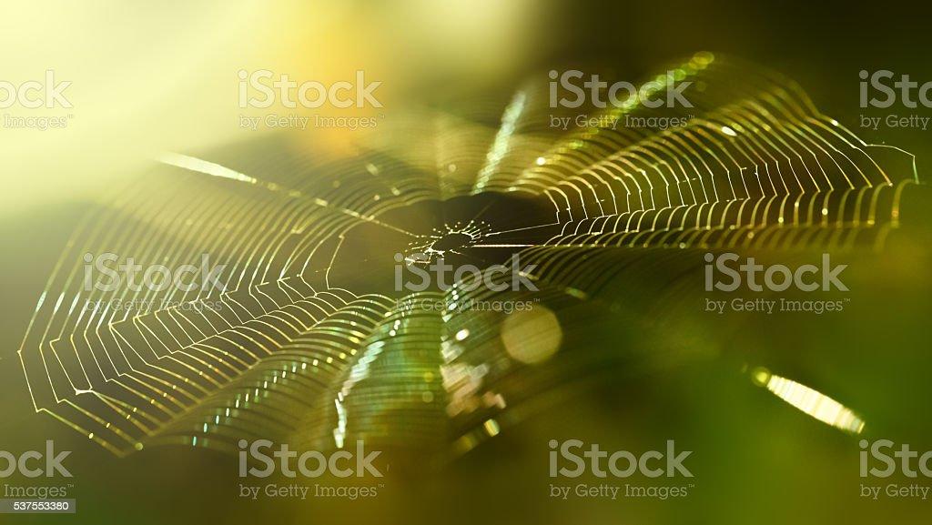 Spiderweb background stock photo