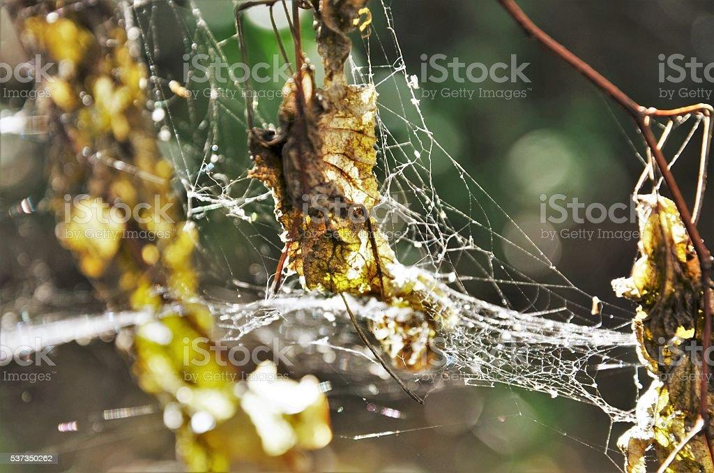 Araignée, éclairée par la lumière du soleil. photo libre de droits