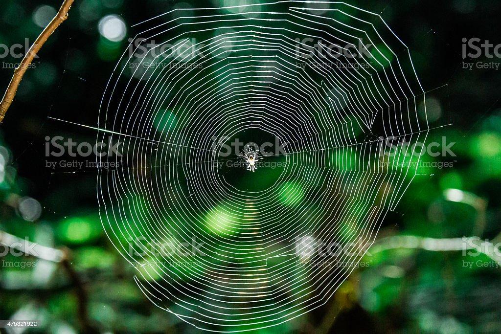 Spiderweb or Cobweb stock photo