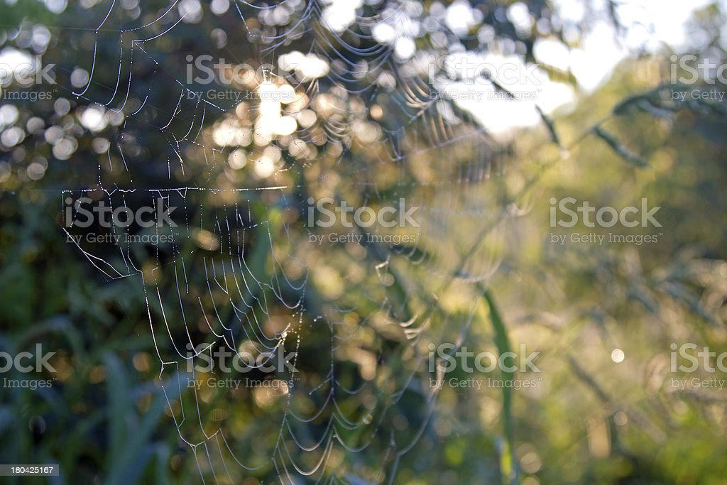spiderweb royalty-free stock photo